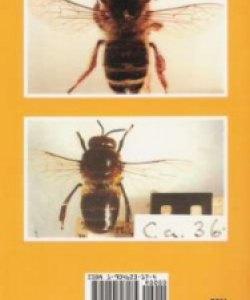 Cover - back dark bee