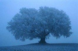 Magazine - Tree