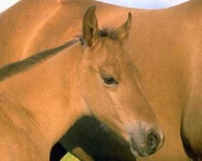 Magazine - Foal