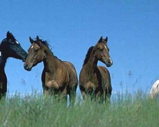 Magazine - Horses